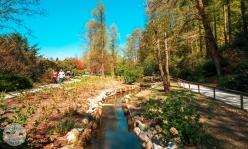 arboretum-volcji-potok-foto10