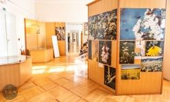 cebelarski-muzej-radovljica-foto11