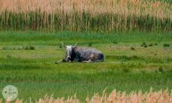 naravni-rezervat-skocjanski-zatok-foto05