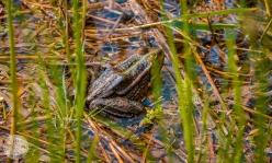 naravni-rezervat-skocjanski-zatok-foto09
