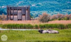 naravni-rezervat-skocjanski-zatok-foto10