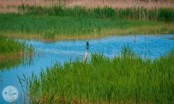 naravni-rezervat-skocjanski-zatok-foto16