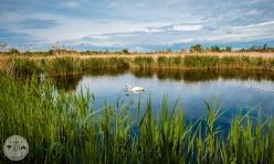 naravni-rezervat-skocjanski-zatok-foto17