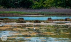 naravni-rezervat-skocjanski-zatok-foto18