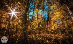 Listnati gozd v okolici slapu Šum