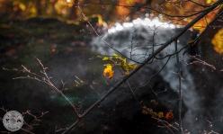 Detajl narave, v ozadju prvi skok slapu Šum