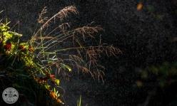 Detajl narave s pršem vode slapu Šum