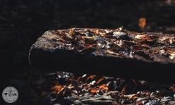 Detajl brvi na potoku Nemiljščica