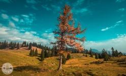 velika-planina-foto03
