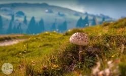 velika-planina-foto24