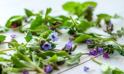 Cvetovi in listi pljučnika