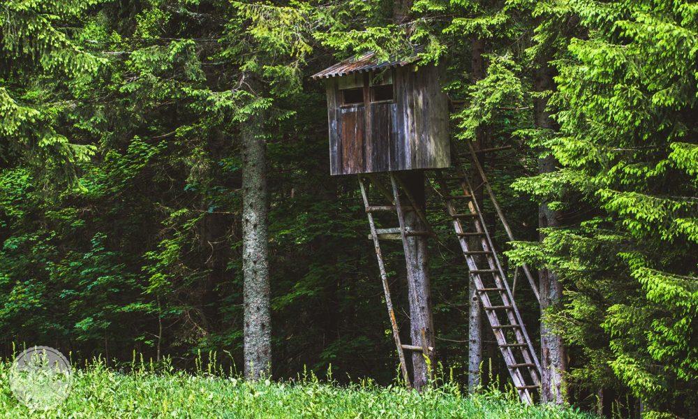 Golica, narcise, travnik, gore, karavanke