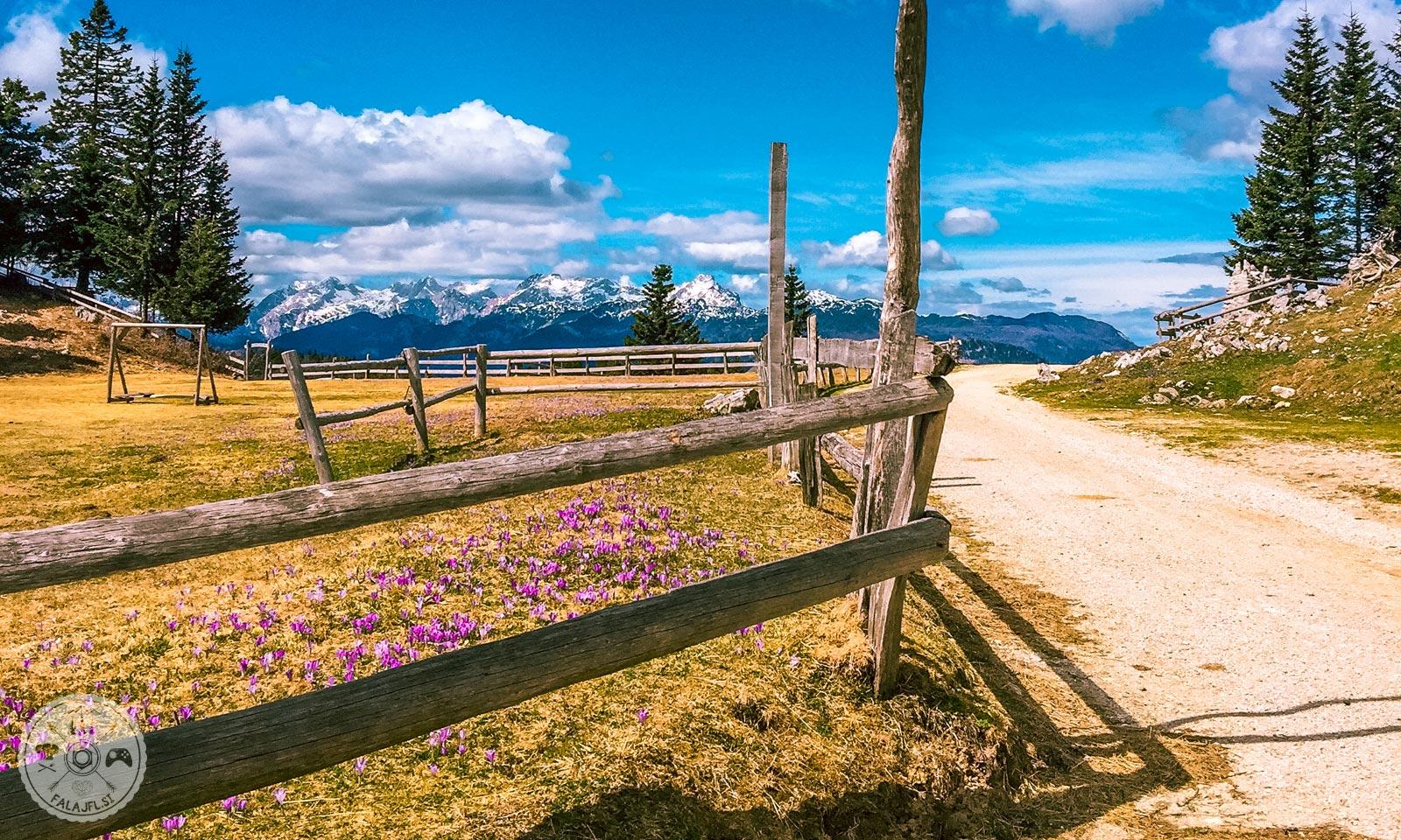 Menina planina, žafran, pomlad
